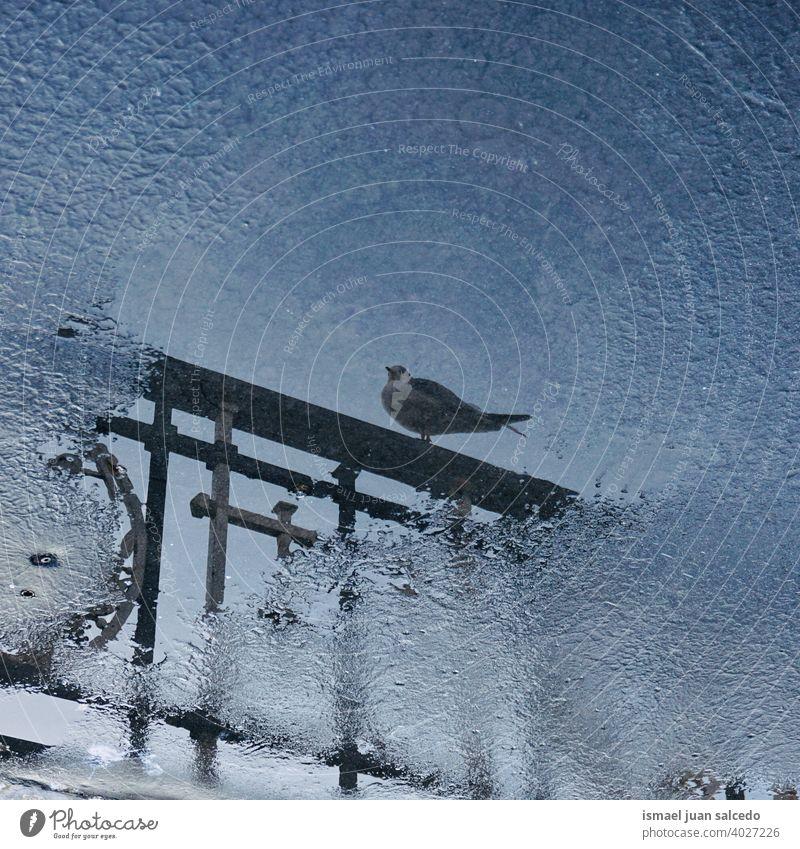 Taube spiegelt sich in der Pfütze Vogel Tier Federn Schnabel Flügel Park Straße im Freien Natur wild Tierwelt Reflexion & Spiegelung reflektiert Wasser