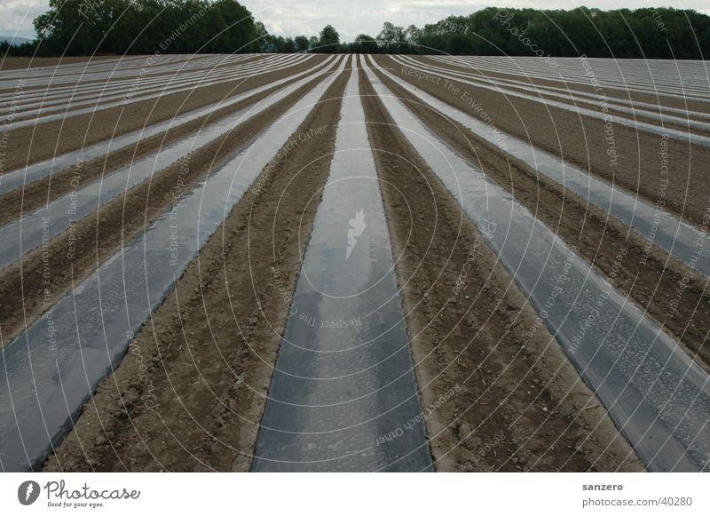 Plantage Natur Feld Landwirtschaft