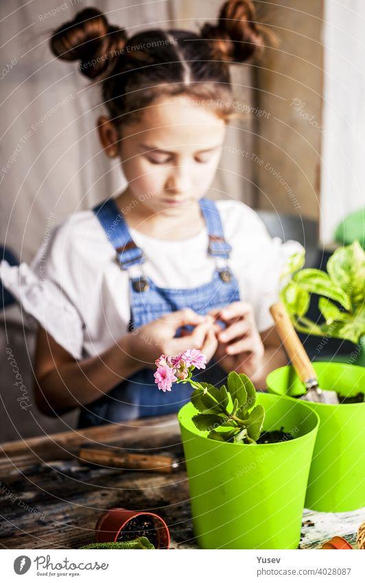 Kleine konzentrierte Mädchen mit Haarsträhnen pflanzt eine Blume in einem Blumentopf. Frühling Indoor-Aktivität. Kaukasische Ethnie. Vorderansicht. Vertikale Aufnahme. Selektiver Fokus