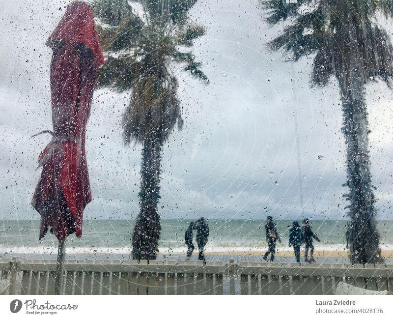Regentropfen auf dem Fenster Wind Wassertropfen Natur Pflanze Palme Meer Strand Menschen Tropfen schlechtes Wetter Herbst nass Farbfoto Detailaufnahme Tag