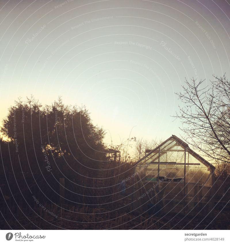 Gewächshaus im geheimen Garten. Schrebergarten Sonnenuntergang stimmungsvoll Stimmung Wolkenloser Himmel Natur Menschenleer Baum Textfreiraum Kleingartenkolonie