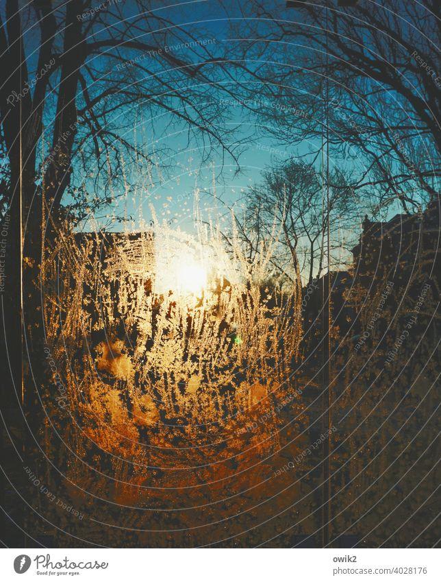 Abziehbild Sonne Winter Bäume Silhouette Wolkenloser Himmel Häuser Stadt Glas Farbfoto Frost Außenaufnahme kalt Tag bizarr glänzend Nahaufnahme Eisblumen