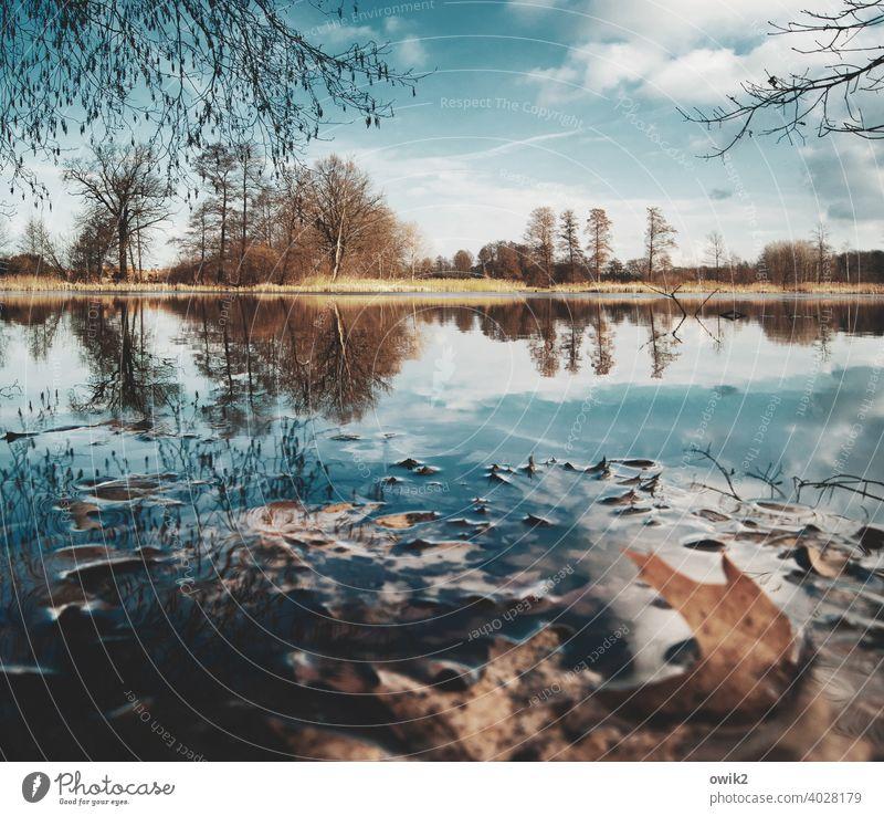 Stilles Wasser Panorama (Aussicht) Totale Sonnenlicht Reflexion & Spiegelung Licht Tag Textfreiraum unten Textfreiraum oben Freiheit Ferne Seeufer Urelemente