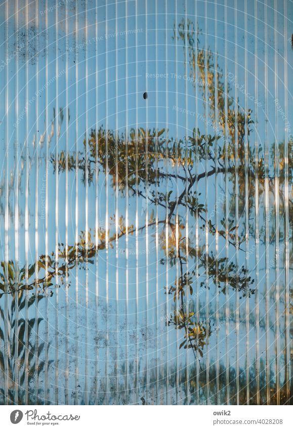 Sequenz Glaswand Zweige Sichtschutz Innenaufnahme Fenster verschwommen Rätsel Struktur Kontrast Glasscheibe Blatt Totale Unschärfe Nahaufnahme Schutz