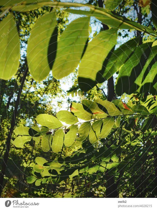 Winkelemente Blätterdach Natur Farbfoto Umwelt Sonnenstrahlen Baum Gegenlicht leuchten Licht Lichterscheinung Tag Schatten Menschenleer Textfreiraum oben