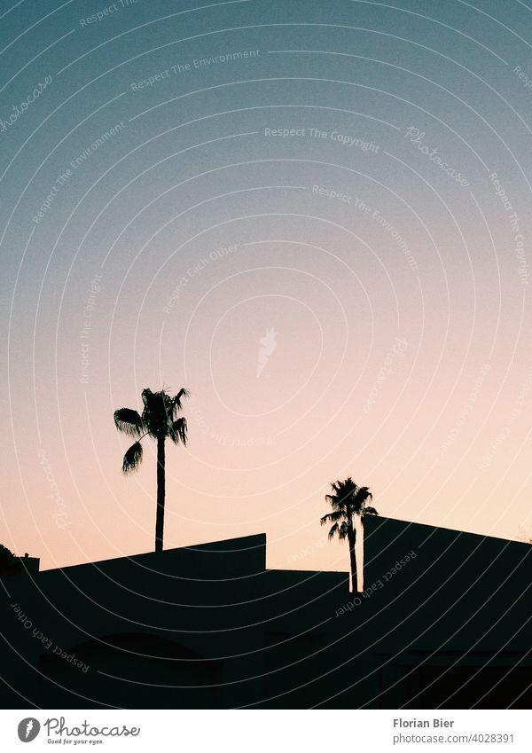 Silhouette von Palmen und Hausdächern im Sonnenuntergang Gegenlicht Hausdach Himmel Abend Schatten Dämmerung Kontrast ästhetisch Geometrie geometrisch