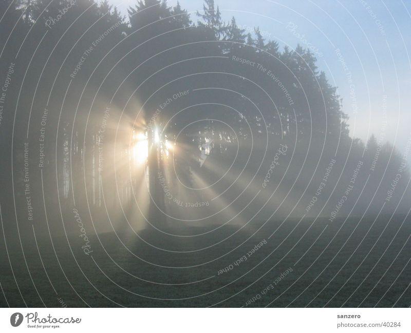 Lichtung Wald Waldlichtung Sonnenstrahlen Sonnenaufgang Morgen Lichtstrahl
