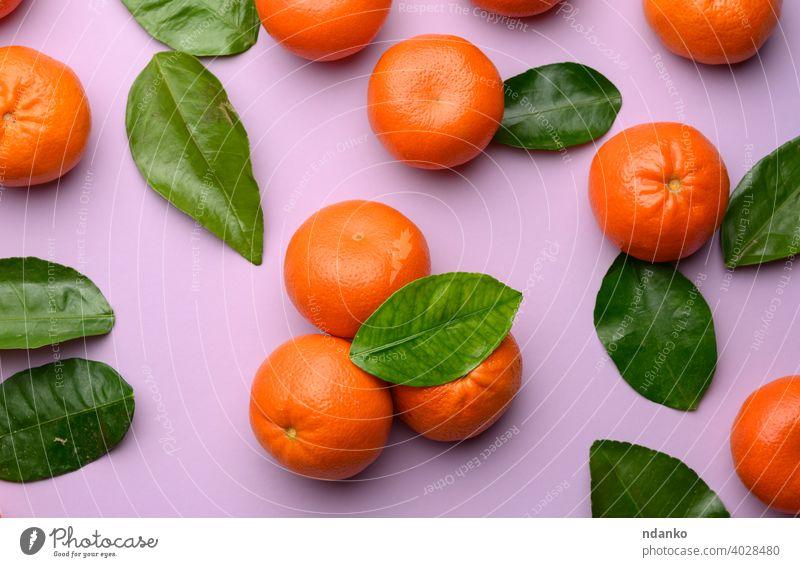 reife Mandarinen und grüne Blätter auf einem lila Hintergrund flach Kulisse Menschengruppe orange Lebensmittel Vitamin Frische ganz roh Nahaufnahme Blatt
