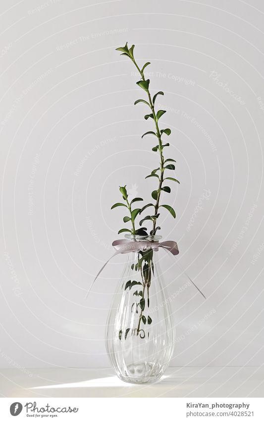 Moderne transparente Glasvase mit Pflanze auf weiß Stillleben minimalistischer Stil niemand Schatten Innenbereich Light leak moderner Stil sehr wenige gelb