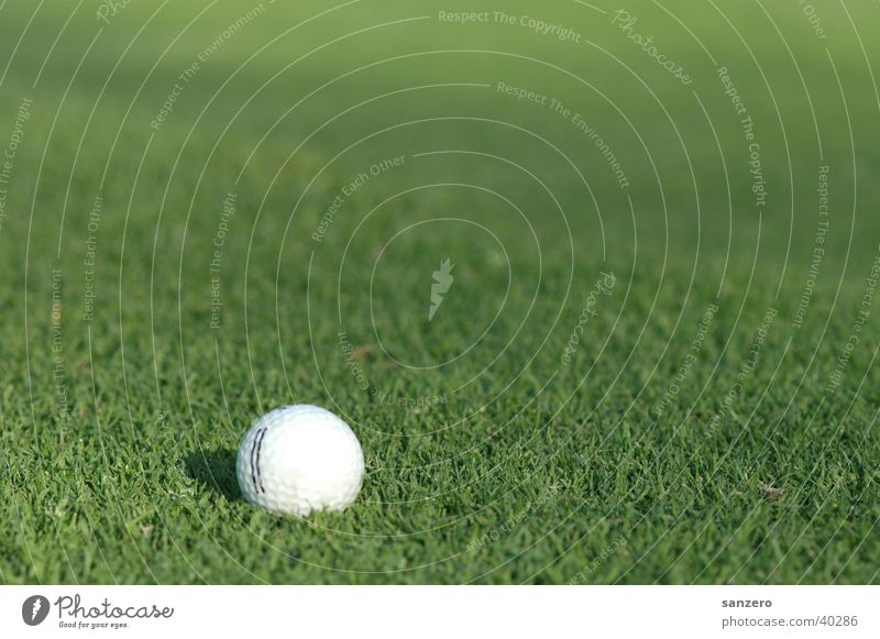 Golfball Sport Sportrasen Golf Golfball