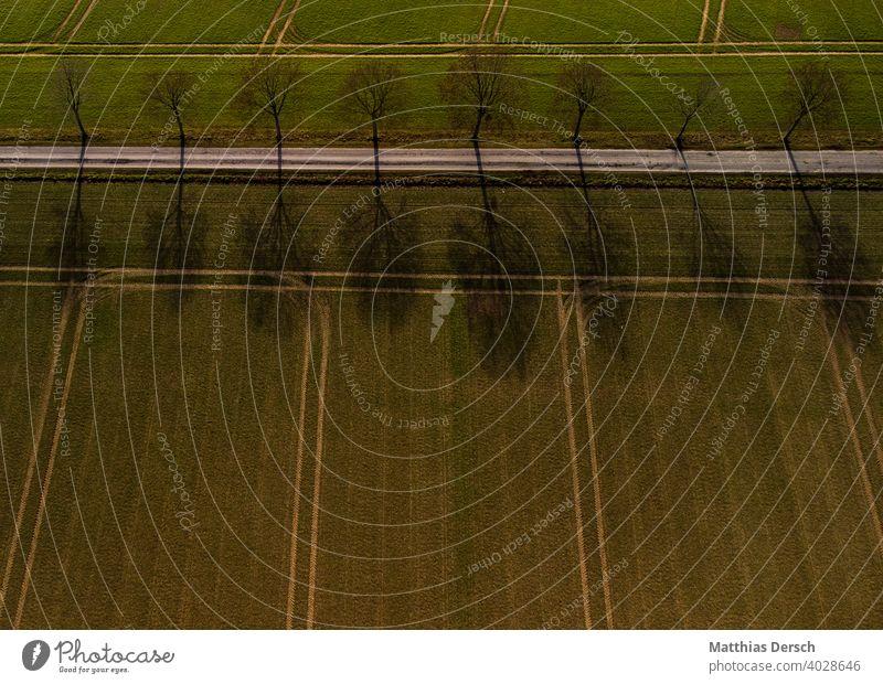 Luftaufnahme eines Wanderwegs Drohnenansicht Drohnenaufnahme Wege & Pfade Straße Allee Feld Landwirtschaft Landschaft