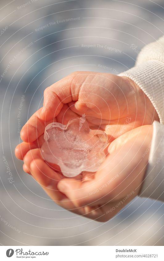 150 | Ein Kind hält eine Blumen-Eisform in den Händen in die Sonne Eisblume Kinderhände halten Hand Farbfoto Mädchen Junge Nahaufnahme Natur Sonnenschein