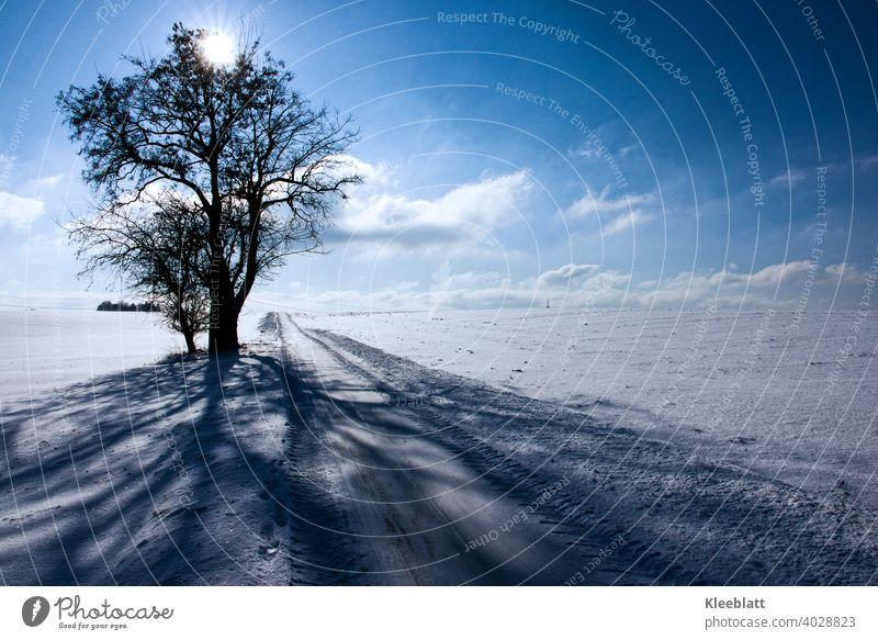 Winteridyllein Blau und Weiß mit alten Lindenbäumen - Schattenwurf am Wegesrand Winterimpression kalt Gegenlicht tiefes Blau weiße Wolken blauer Himmel