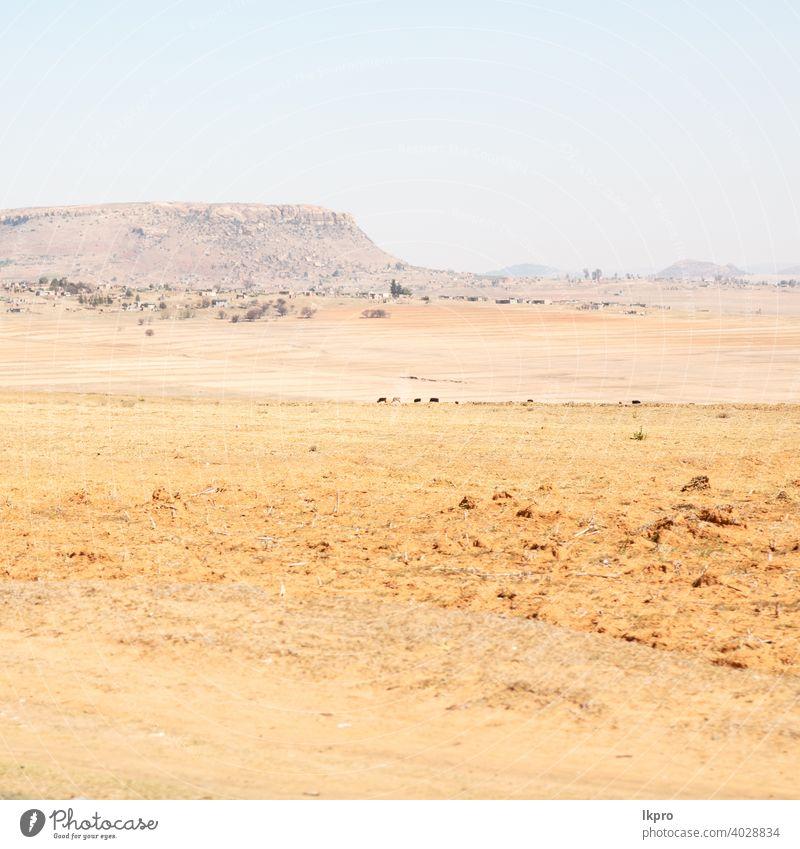 in südafrika landen busch und baum Afrika Süden Landschaft gelb grün Berge u. Gebirge Hügel Lesotho Park gry Cloud Afrikanisch Natur national malerisch Gras