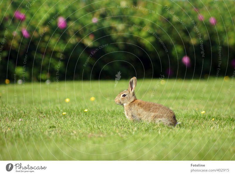 Schön wachsam bleiben! Umwelt Natur Pflanze Tier Sommer Schönes Wetter Gras Sträucher Garten Park Wiese Wildtier Fell 1 frei hell kuschlig klein nah natürlich