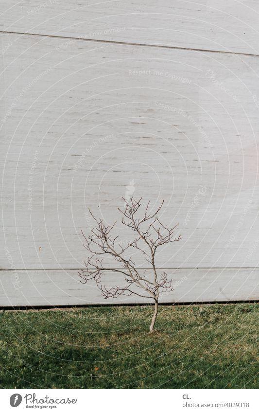 sprössling Sprössling Baum klein wachsen Wachstum Wand Rasen Gras Zweige u. Äste 1 grün grau Natur Stadt einzeln symbolisch Menschenleer Außenaufnahme Frühling