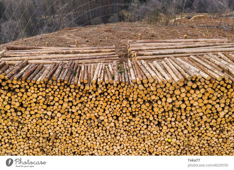 #Holzstapel 1 Wald Borkenkäfer Natur Baumstamm