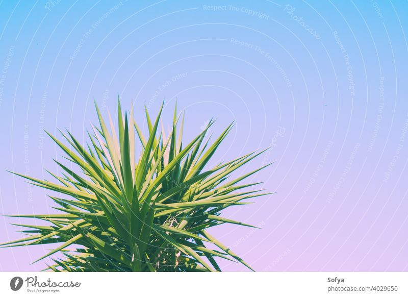 Abstrakter botanischer Hintergrund mit Palme gegen den Himmel Blatt Handfläche purpur grün Pflanze Textur Muster getönt Tapete Laubwerk Lavendel violett Sommer