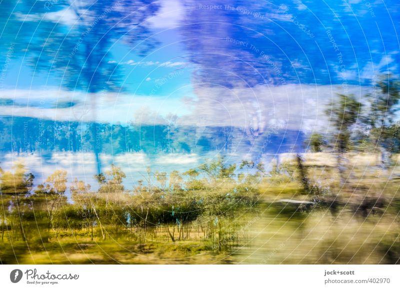 Brandy Busch Expedition Baum Sträucher Outback Queensland fahren Geschwindigkeit Fernweh Hemmungslosigkeit exotisch Natur Doppelbelichtung