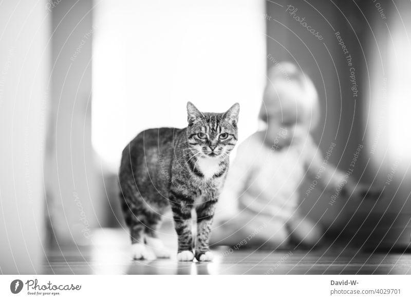 zu Hause - Katze und Kind Haustier Häusliches Leben Wohnung Tier zusammen treu schön niedlich Boden Lifestyle