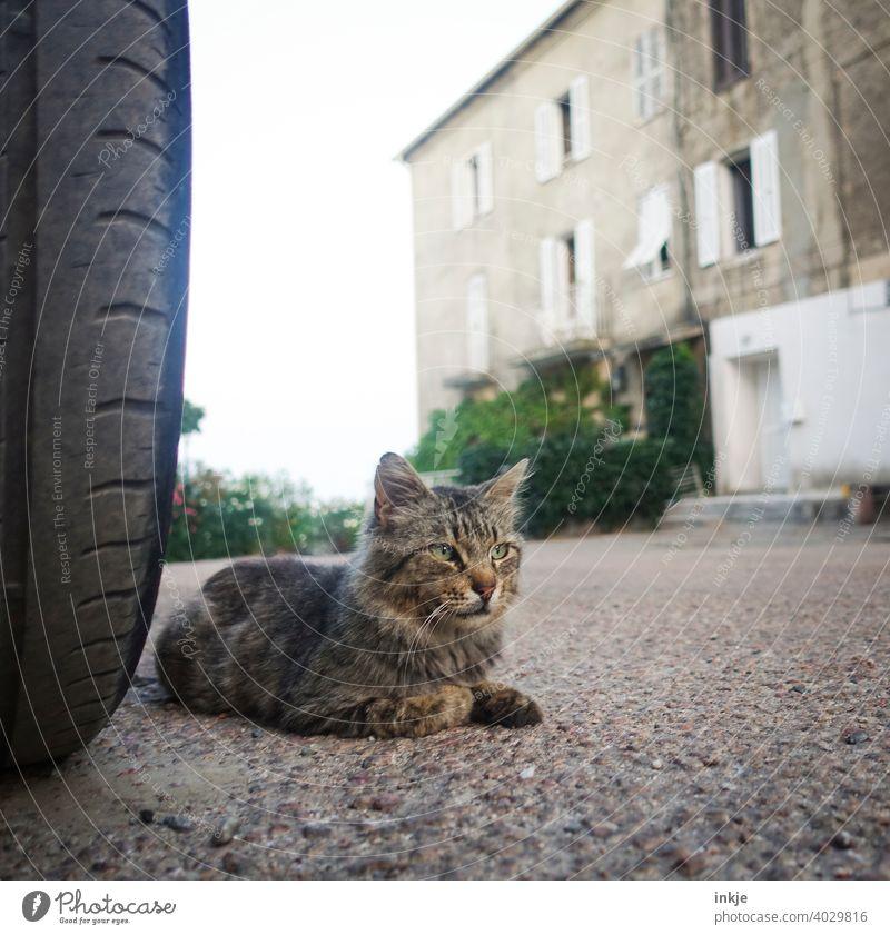 Straßenkater auf Korsika Farbfoto Straßenkatze Außenaufnahme Tierleben Nahaufnahme wild Katze Herumtreiben freilebend Tierporträt