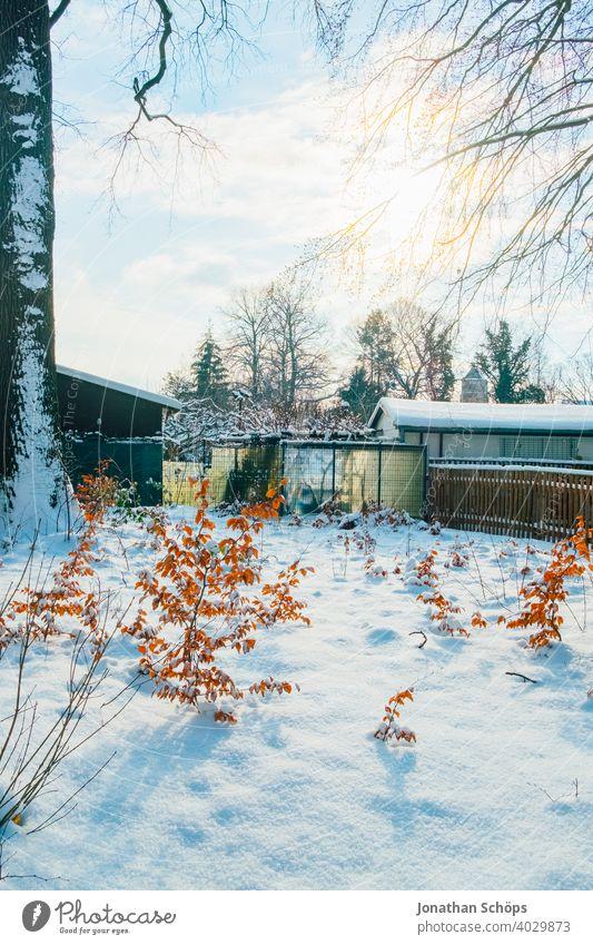 Waldrand im Winter bei Schnee Baum Büsche Gegenlicht Jahreszeit Landschaft Natur Sonnenschein Winterwald Zaun draußen sonne kalt Außenaufnahme Schneelandschaft