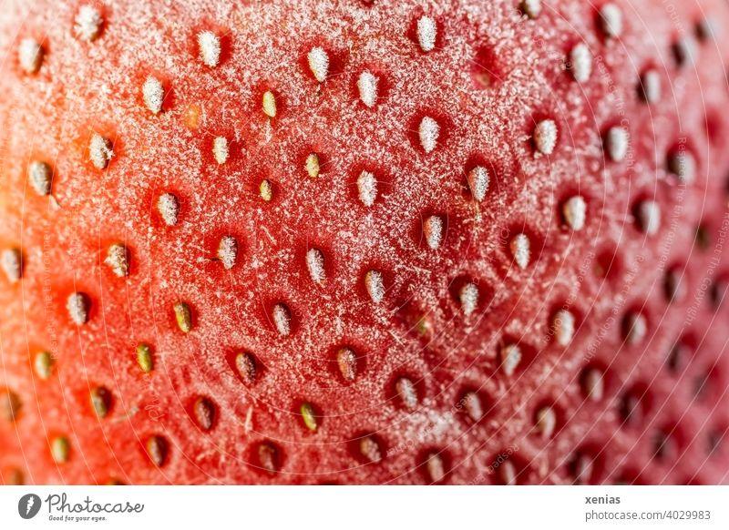 Makroaufnahme einer tiefgefrorenen roten Erdbeere mit ihren Nüsschen an der gefrosteten Oberfläche Sammelfrucht Obst Frucht Lebensmittel Ernährung