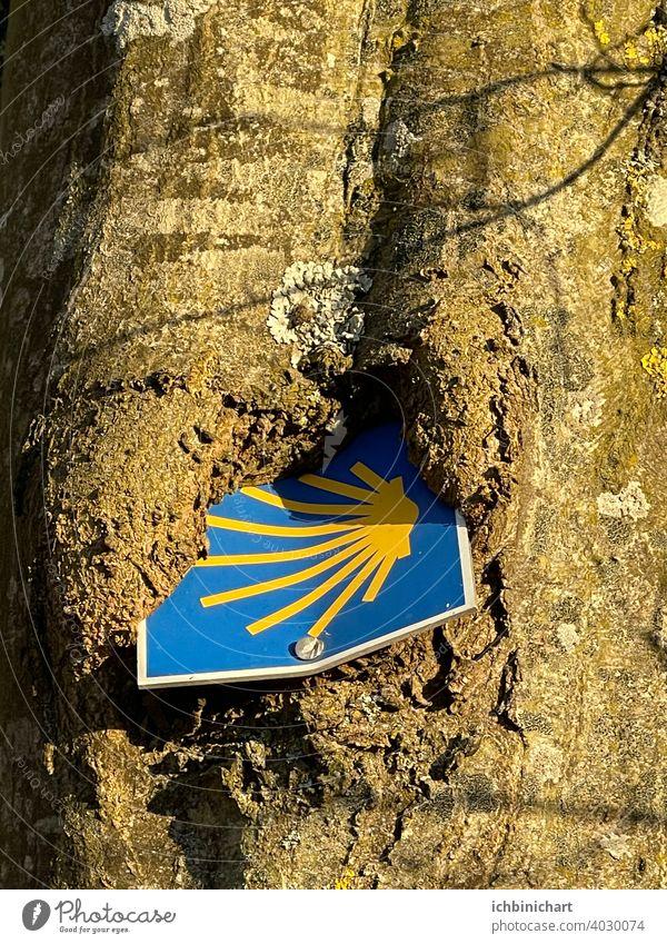 Jacobsweg -Schild wächst langsam in Baum ein Jacobsweg Weg Pilgern Schild wächst langsam ein Natur Baum umwächst ein Schild Außenaufnahme Umwelt