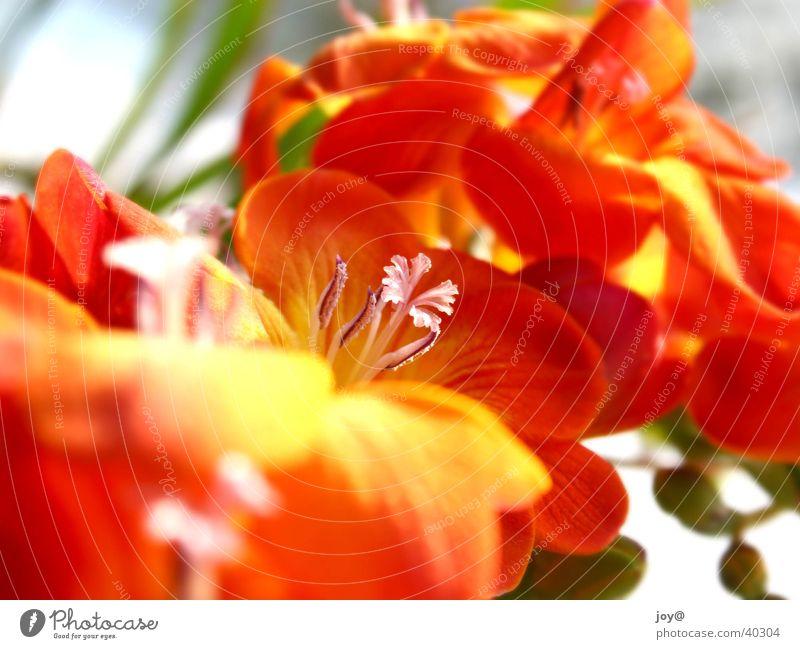 Red flowers Natur Sommer