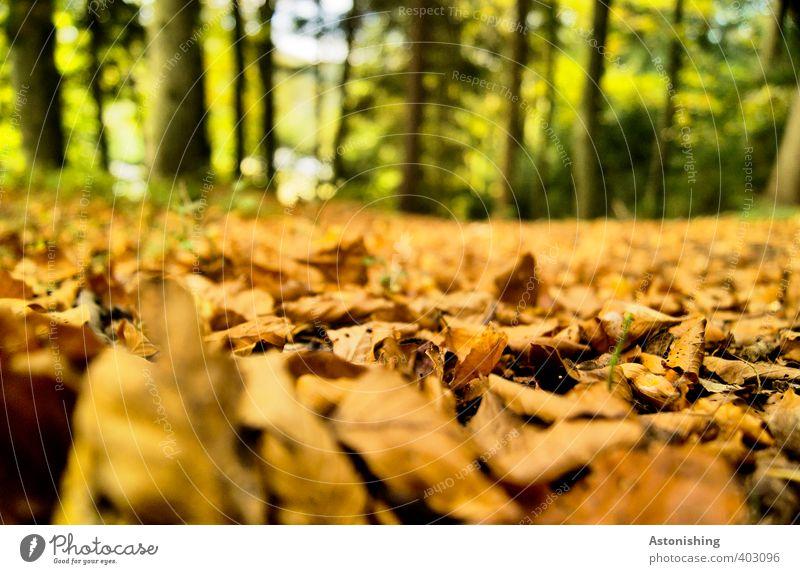 Laubteppich Natur grün Pflanze Baum Landschaft Blatt Wald Umwelt Herbst Holz braun liegen orange Wetter Erde Schönes Wetter