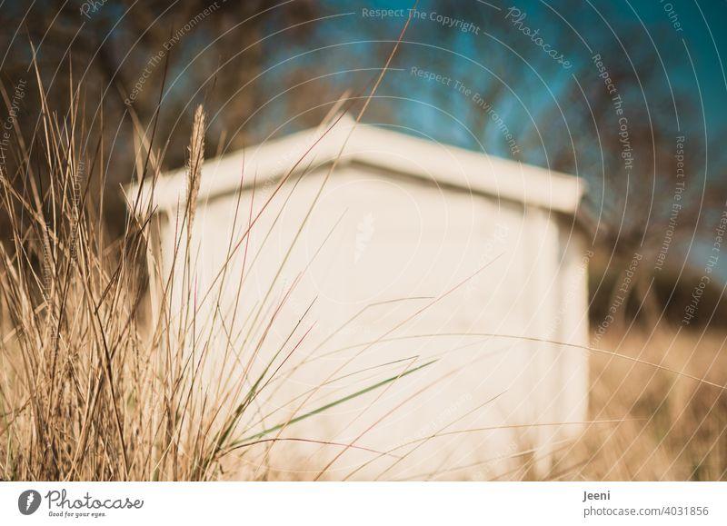 Kleine weiße Holzhütte am Strand in den Dünen eingerahmt von Dünengras Holzhaus Hütte Schuppen Blockhaus Haus klein niedlich Stranddüne Strandspaziergang