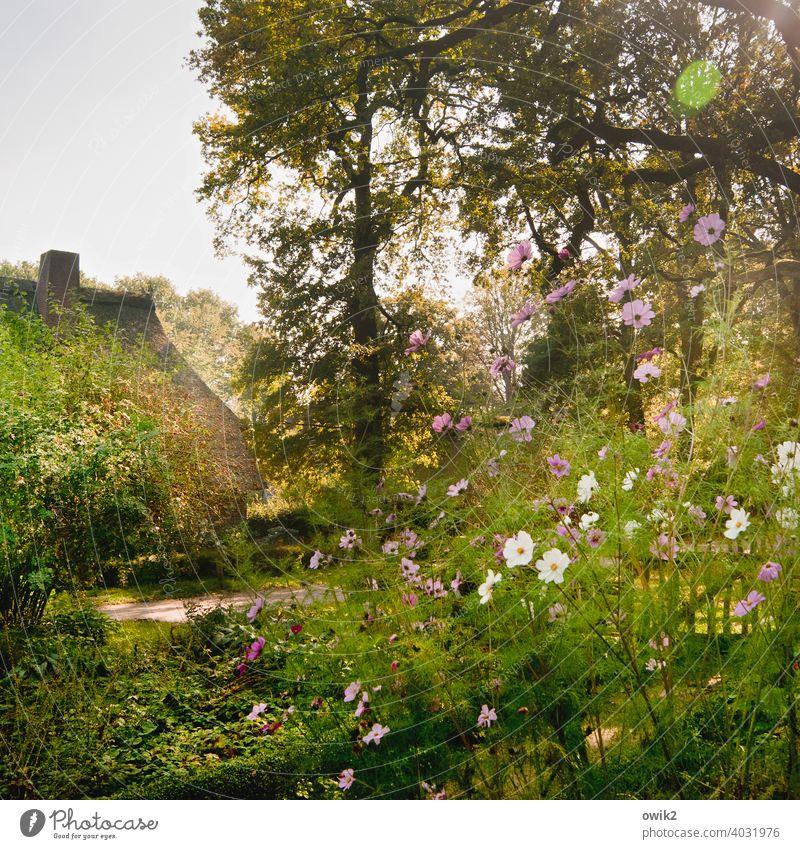 Heidegarten Lüneburger Heide Dorf Wilsede Haus Sonnenlicht Außenaufnahme Tag Menschenleer Farbfoto früher urwüchsig Dorfidylle Idylle Dach Himmel Licht