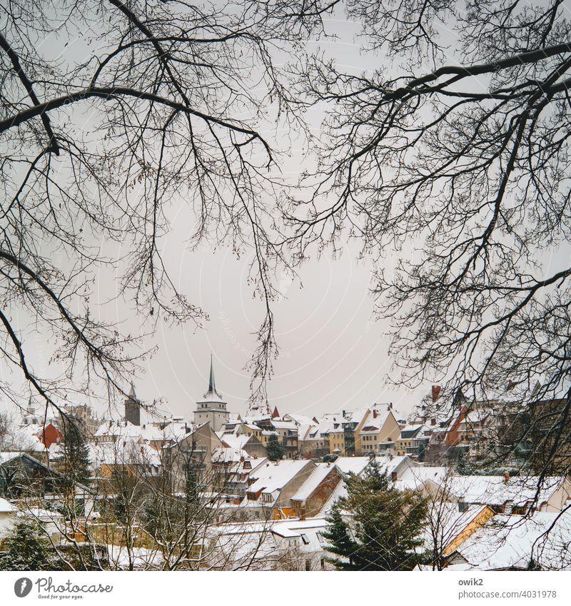 Unterkühlt Stadtzentrum & Innenstadt Bautzen Ostdeutschland Sachsen Zweige u. Äste Baum Bäume Äste und Zweige Farbfoto Schönes Wetter Frost Kälte Eis Winter