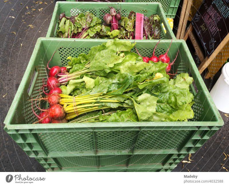 Grüne Kiste aus Kunststoff mit frischen Radieschen auf dem Wochenmarkt am Prenzlauer Berg in der Hauptstadt Berlin Ernte Friusche Gemüse Markt Blätter Ernährung