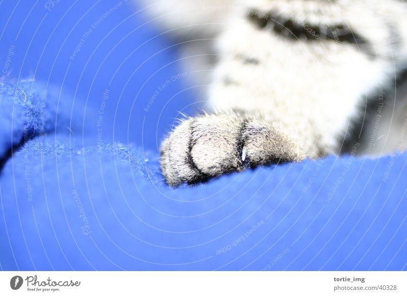 CATWALK Tier Katze Pfote Haustier Krallen