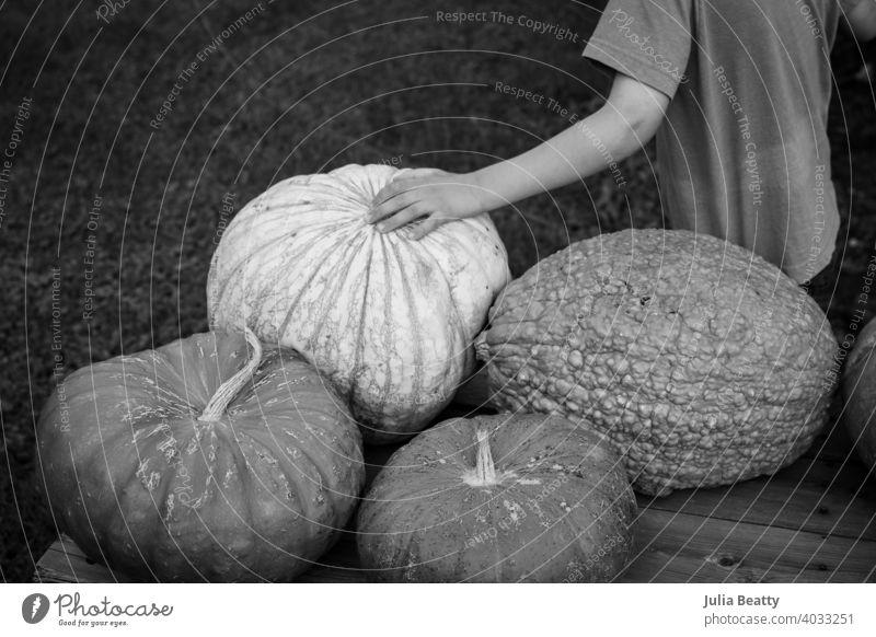 Junges Kind berührt einen strukturierten Kürbis an einem Bauernhofstand im Herbst orange Halloween Arme berühren sensorisch Textur Autismus taktil rau holprig