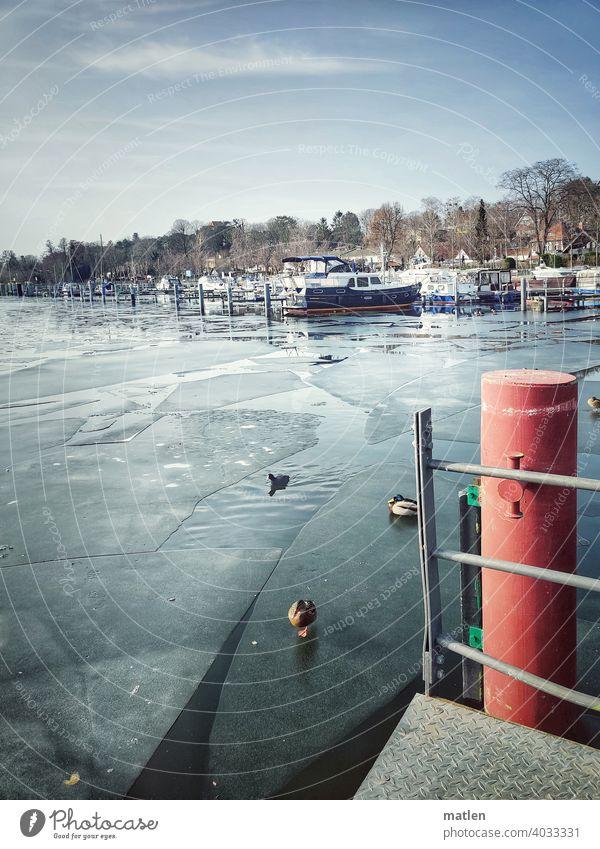 Hafen Kladow Berlin Winter Eisscholle Schönes Wetter Ente Steg Wasser Farbfoto gefroren Yacht Menschenleer Tag Fluss Außenaufnahme