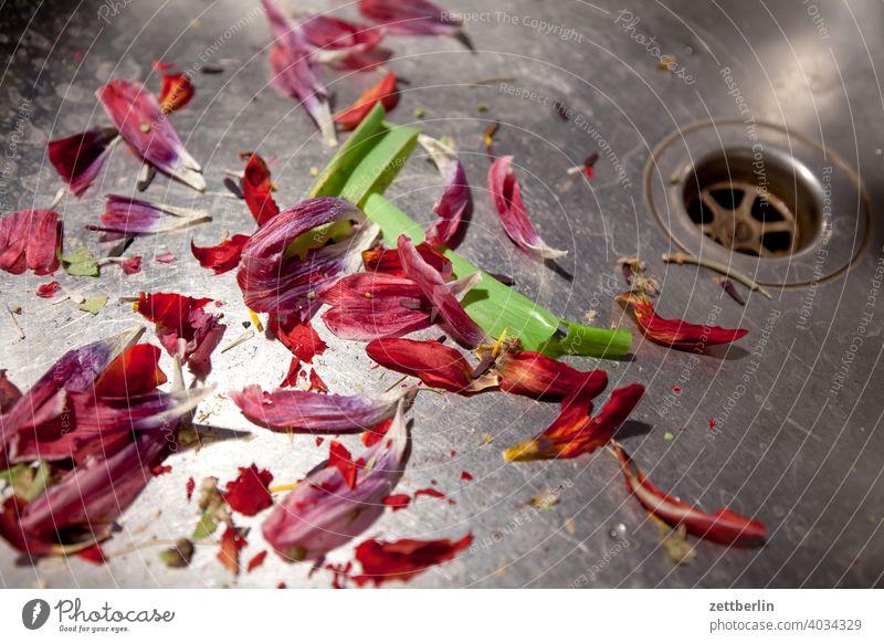 Verblühte Tulpen ausguss becken blüte blütenblatt küche rest tulpe tulpenblüte verwelkt waschbecke wasserbecken abfluss edelstahl müll biomüll abfall frühling