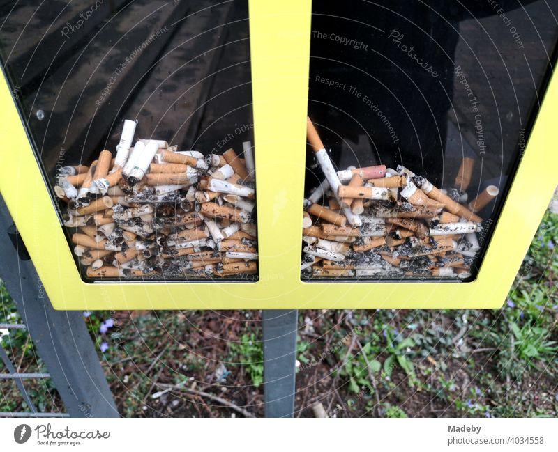 Abstimmung mit Zigarettenkippen in einer gläsernen gelb gerahmten Box an der Goethe Universität in Frankfurt am Main in Hessen Raucher Kippe Aschenbecher Kasten
