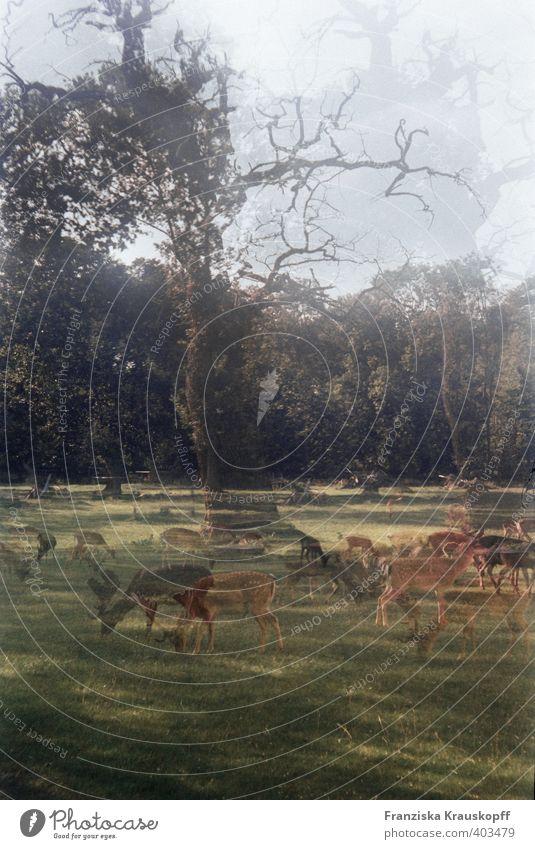 Eichwald Natur blau grün schön Baum ruhig Tier Umwelt Herbst Gras braun Park Zufriedenheit Wildtier ästhetisch Zukunft