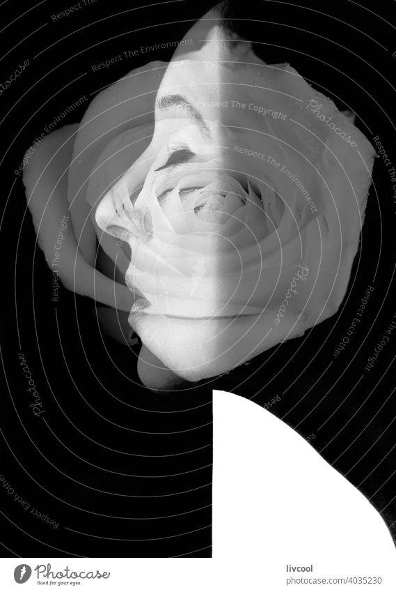 schwarz-weißes weibliches Profil mit verschmolzener weißer Rose Porträt schön Blume Roséwein weiße Rose zusammengeführt Leistung lieblich niedlich