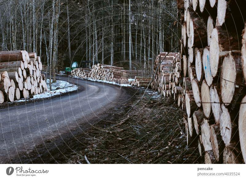 holzweg Baumstämme Wald Schneeschmelze Frühling liegen Baumstapel Holzstapel Schneereste Weg Straße Forstweg Landschaft Nutzholz Brennholz Forstwirtschaft