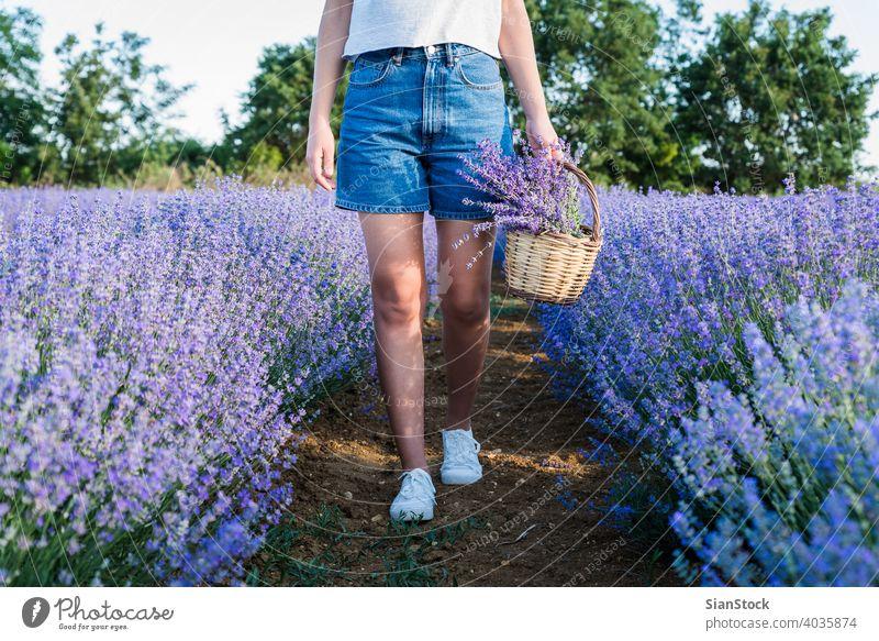 Junge Frau hält Weidenkorb mit Lavendelblüten im Feld Korb Sonne natürlich Mädchen Blumen purpur im Freien Blumenstrauß Natur Kräuterbuch geblümt Wiese Tag