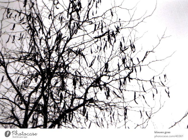 rumhängen Himmel Baum Blatt Wolken Gefühle Zweig