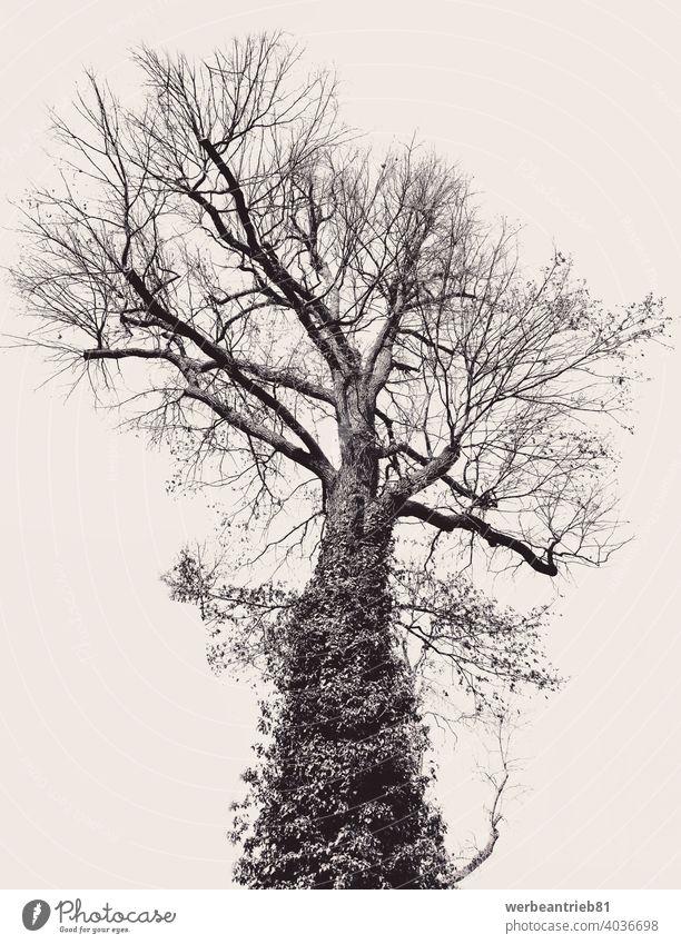 Schwarz und kunstvoll großen Baum auf beige Hintergrund schwarz vereinzelt hinterlistig Natur Wachstum Kunstwerk abstrakt kreativ anders Design künstlerisch