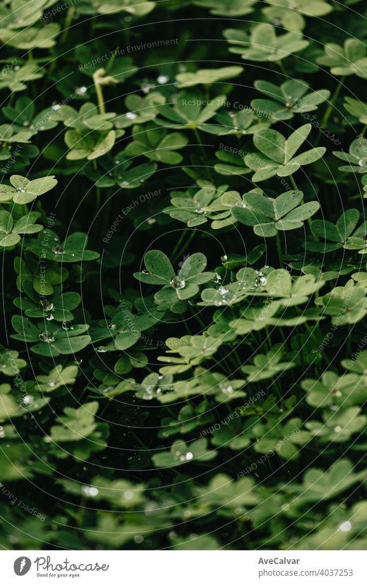 Ein Hintergrund von einer Gruppe von grünen Blumen mit Wassertropfen und starken Schatten im Frühling Pflanze Natur Blütezeit Schönheit Saison schön Blütenblatt