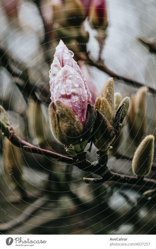 Eine blühende rosa Blume in einem Baum während des Frühlings mit Kopie Raum und bunten Tönen Hintergrund Pflanze Natur Blütezeit Schönheit Saison schön