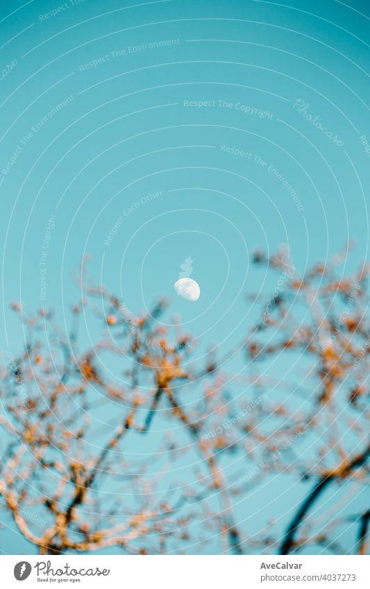 Der Mond in einem klaren Himmel mit der unscharfen Baum Inn vor Grafik u. Illustration Hintergrund Vektor Tag Design Asien Feiertag Nacht Stadtfest Herbst