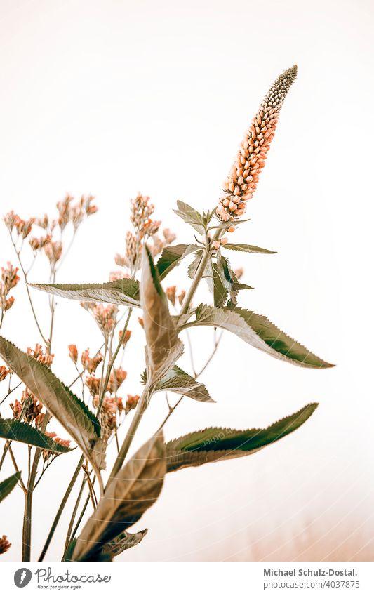 stylisches Frühlingsbouquet Blume Pflanze Zierpflanze schön ruhig flower plant calm quiet grün green still stillleben deko orange strauß blätter atm atmosphäre