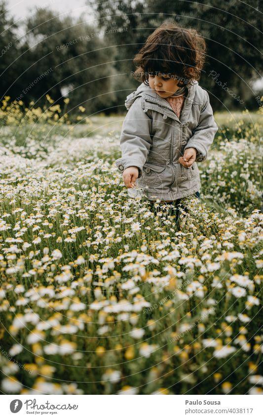 Kind pflückt Frühlingsblumen Gänseblümchen Gänseblümchenwiese Kaukasier 1-3 Jahre Wiese Blume Sommer Gras Natur grün Blüte Pflanze Blumenwiese gelb
